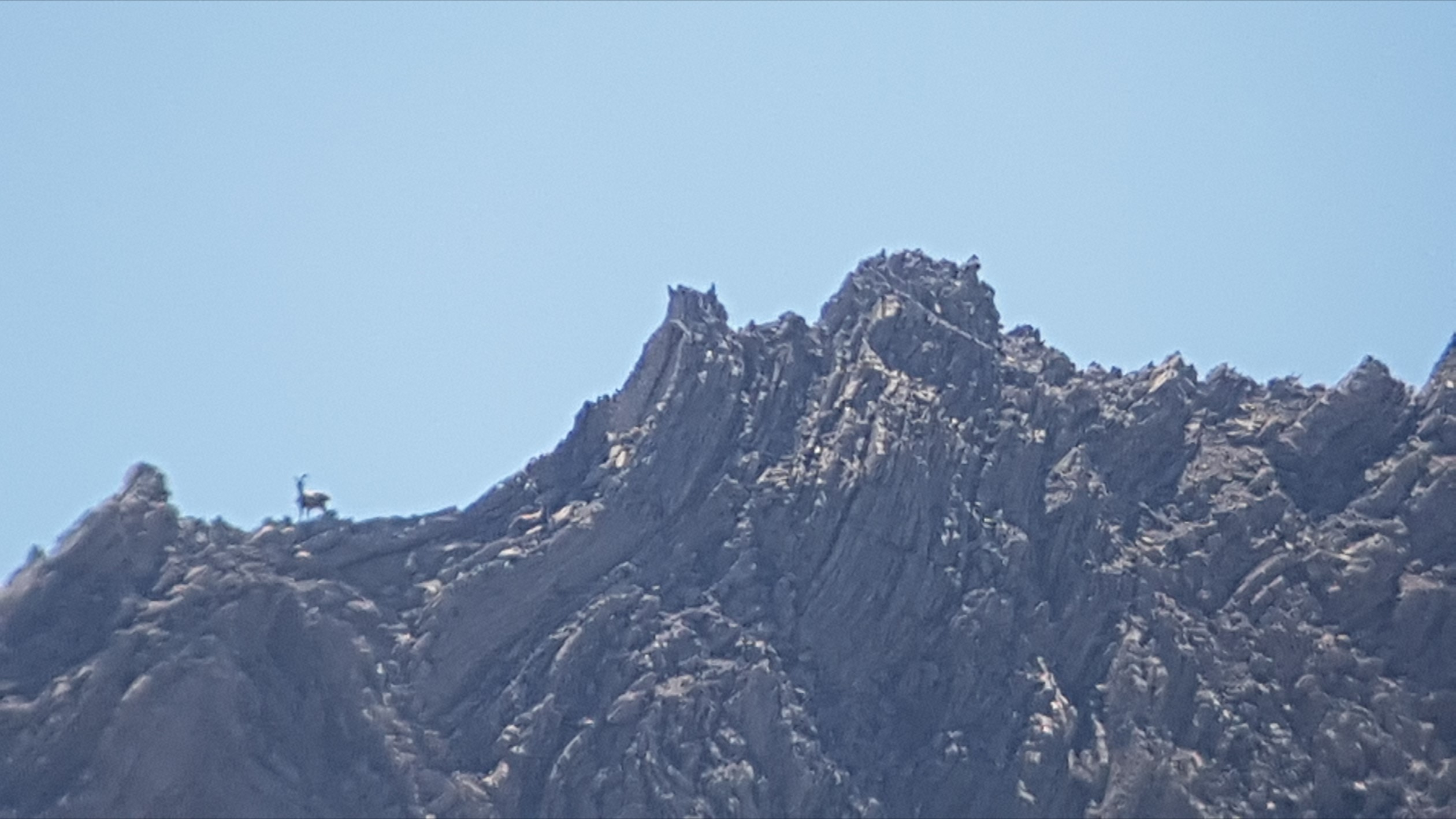 Engadine, National Park, S-chanf, Varusch, Val Trupchun, Alp Trupchun, view on Piz Chaschauna with one Ibex