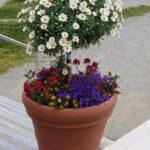 Engadine, St. Moritz, Corviglia, Flowers