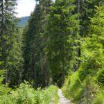 Engadine, Val Sinestra, Kurhaus Val Sinestra, Val Sinestra Forest